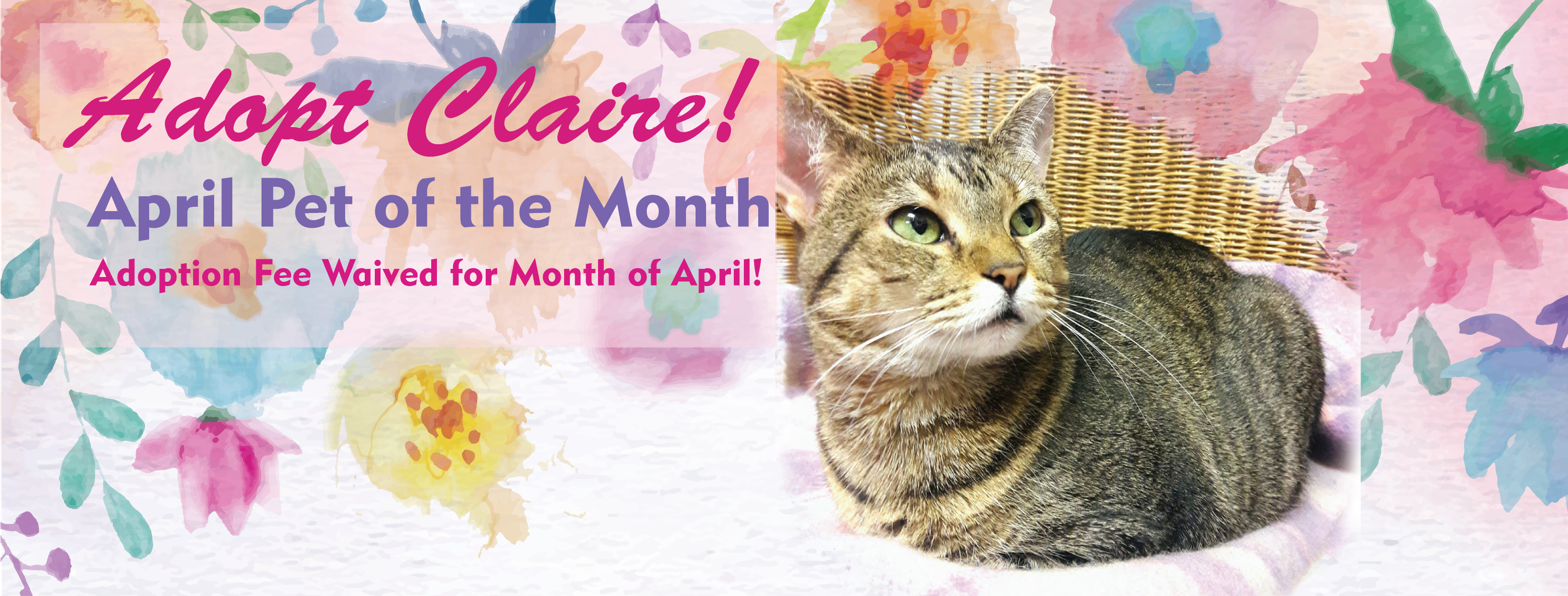 April Pet of the Month!